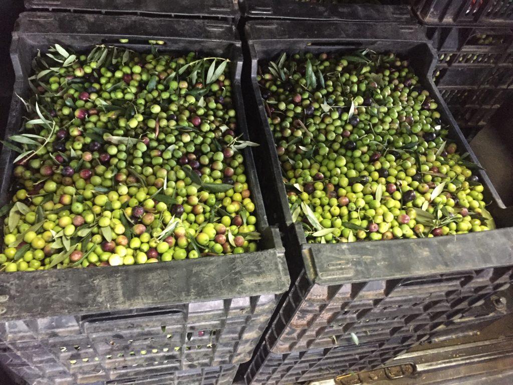 100% Oli d'oliva verge extra